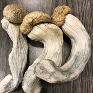 buy-penis-envy-mushrooms-online